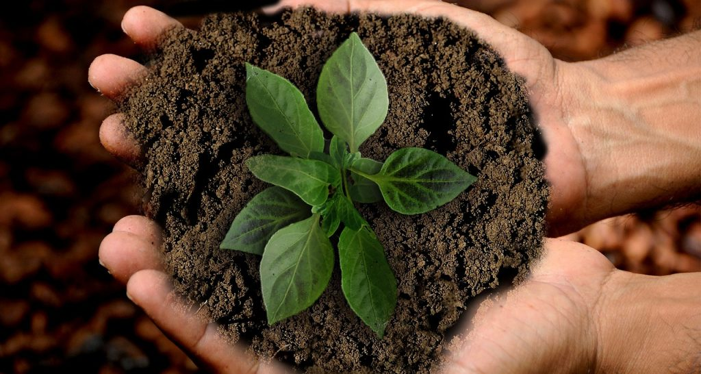 Immagine Educare alla sostenibilità